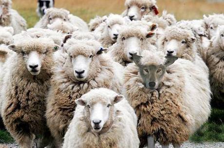 這年頭不下重本騙不到羊了.jpg