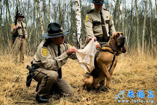 搜救犬的為難.jpg