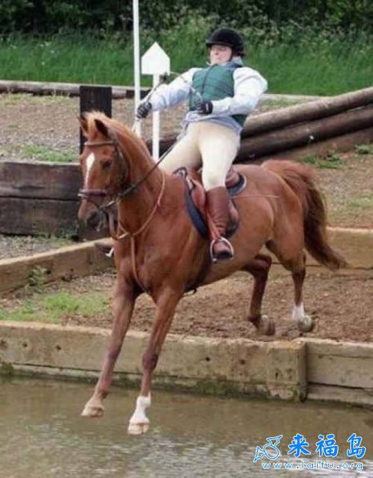 別騎失戀的馬.jpg