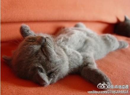 0912上午天涼好個秋 超好睡.jpg