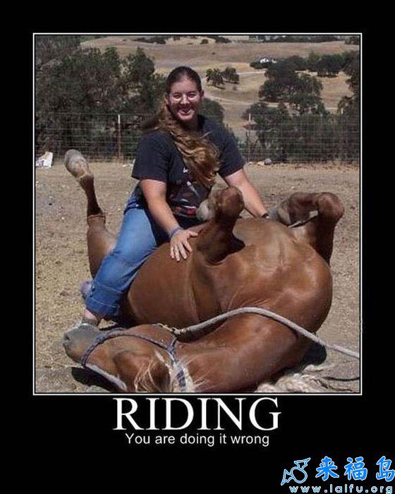 馬不是醬子騎的.jpg