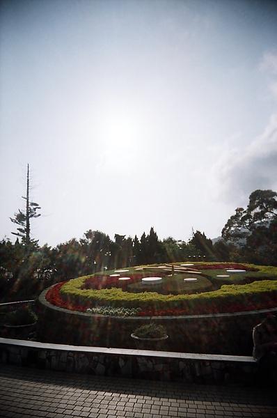 陽明山的花鐘