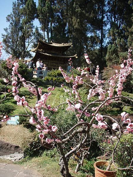 吳三桂的後花園