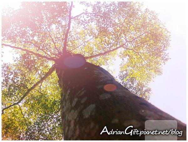 Happy-Tree2.jpg