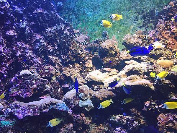 花蓮輕旅行-海底世界