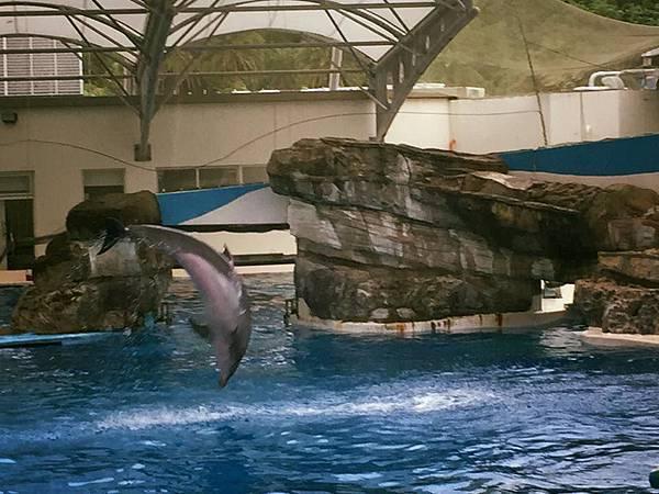 花蓮輕旅行-海豚秀