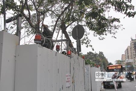 大巨蛋護樹聯盟有人爬上樹阻工程進行