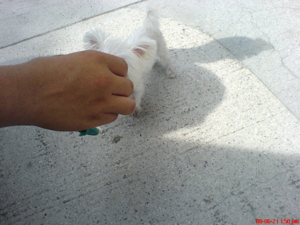 主人的手比他還大