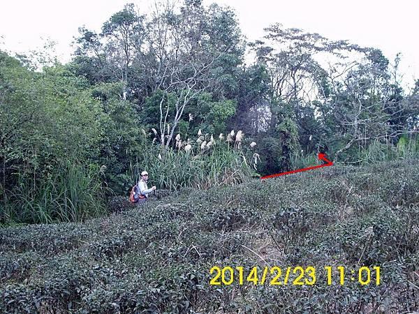 DSCI0033.jpg
