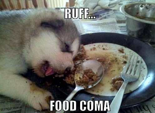 food coma 1.jpg