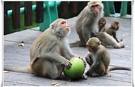 猴子.jpg