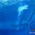 小白鯨.jpg