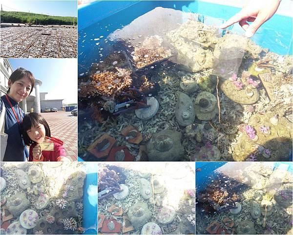 珊瑚礁物種培育體驗活動.jpg