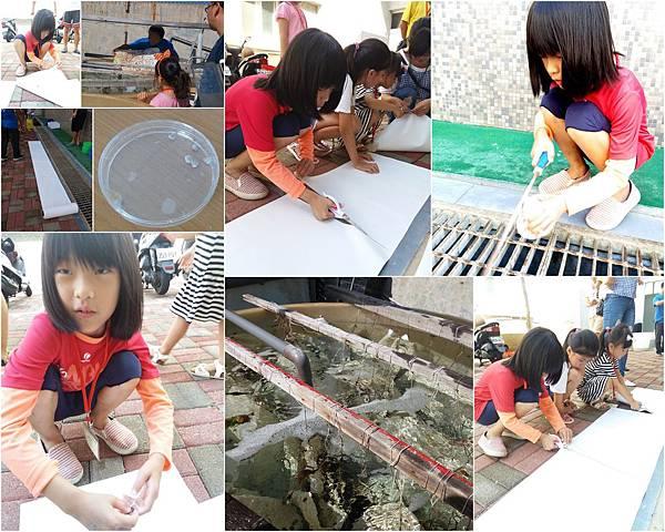 珊瑚礁物種培育體驗活動3.jpg