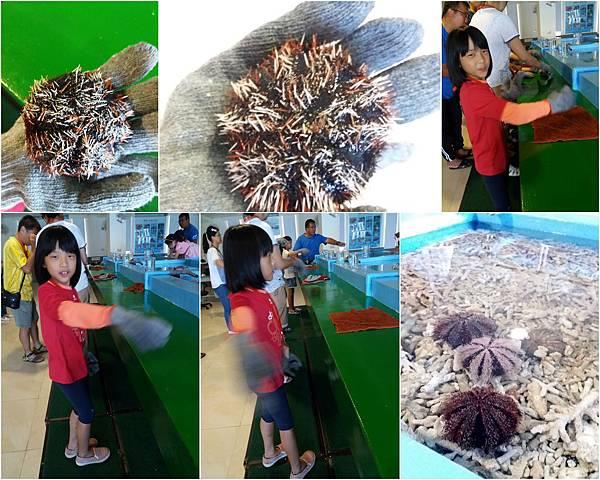 珊瑚礁物種培育體驗活動4.jpg
