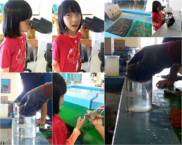 珊瑚礁物種培育體驗活動5.jpg