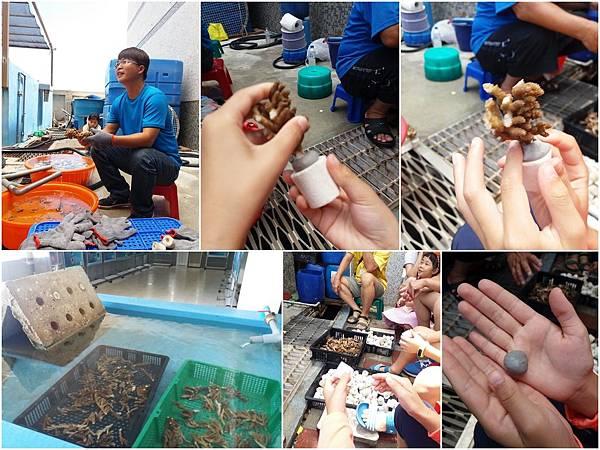 珊瑚礁物種培育體驗活動6.jpg