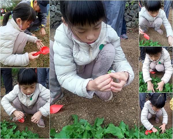 農作體驗4.jpg