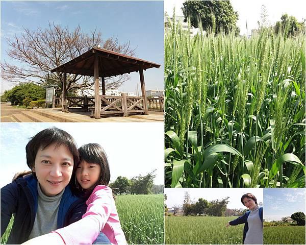 大雅小麥和九天黑森林2.jpg