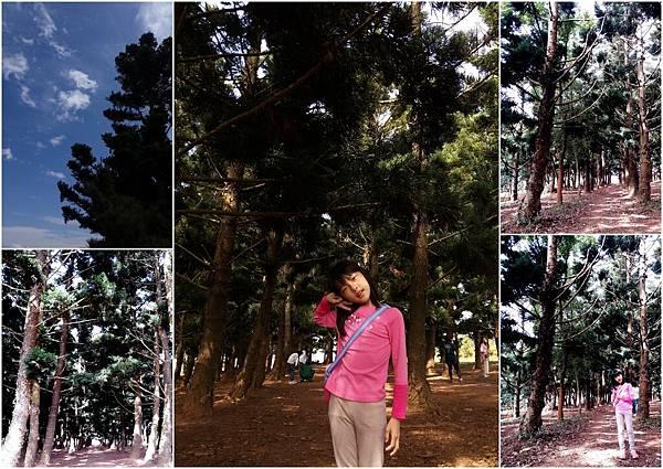 大雅小麥和九天黑森林3.jpg