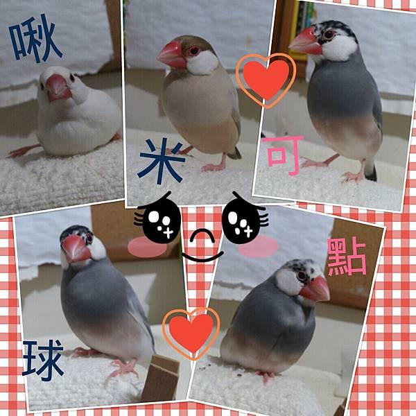 2012-11-05-00-21-42_deco