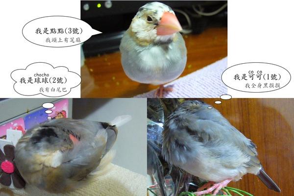20110309-改.jpg