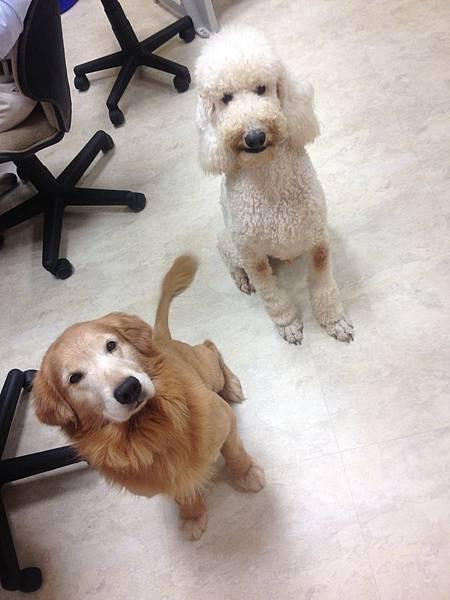 Boss & Mio