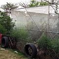 屏東家的網室栽種區
