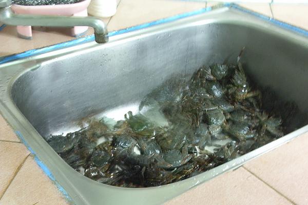 挖....詭異的螃蟹-當宵夜!