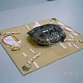 035 Turtle skeleton