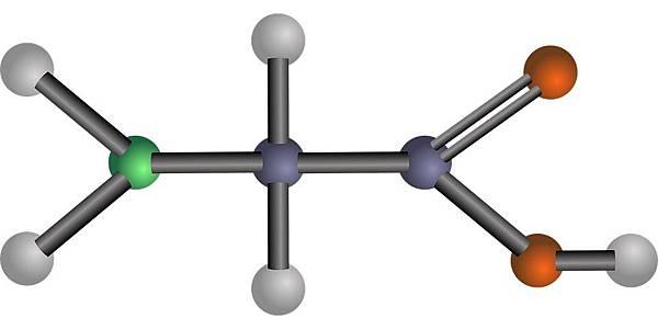 核酸胺基酸核醣核酸.jpg