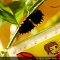 紅紋鳳蝶-尺標-前蛹-001.JPG