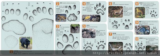 台灣哺乳動物腳印辨識-摺頁_web-1