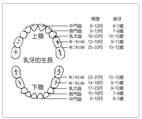 乳牙生長順序.jpg