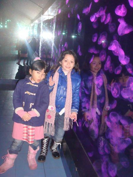 水母變紫色.JPG