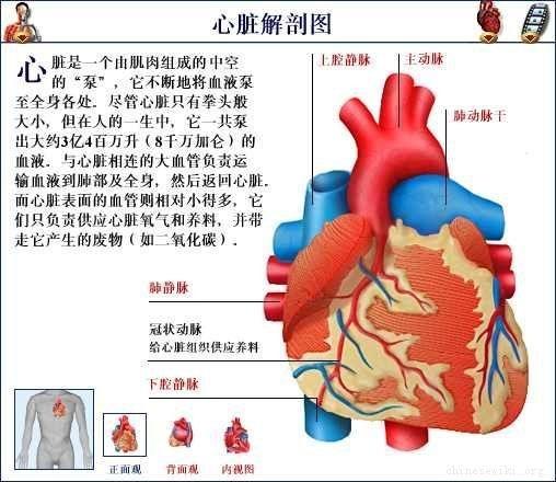 心臟解剖圖.jpg