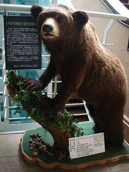 小熊標本.jpg