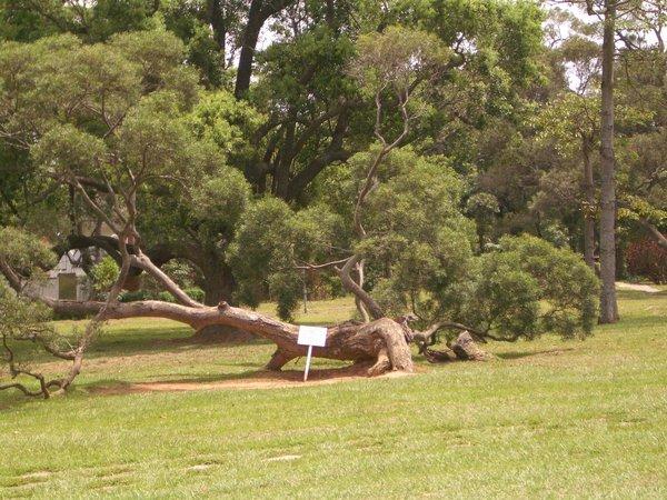 教堂外趴著長的樹