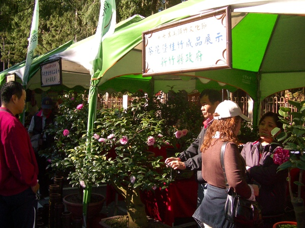 新竹縣茶花協會攤位