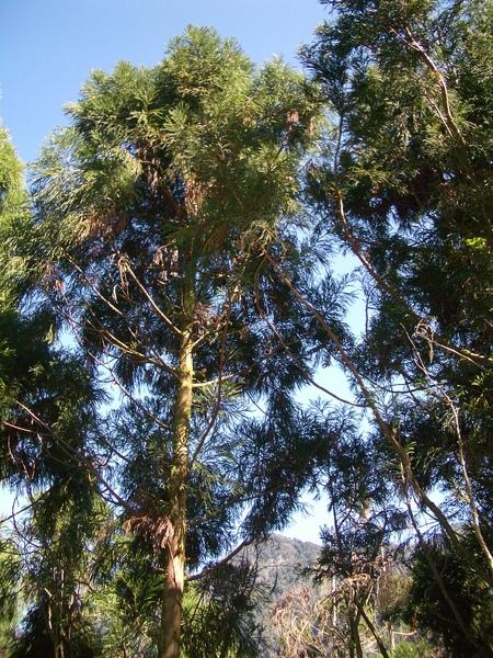 空中步道可以近距離觀察樹梢生態