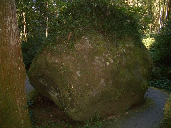 這顆石頭像不像頭上長頭髮?