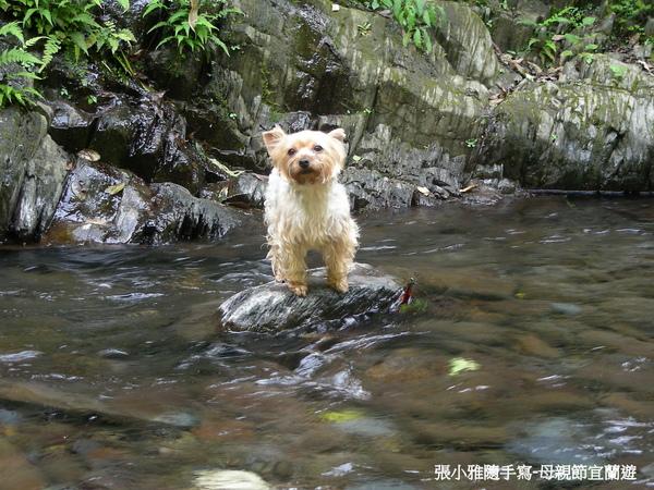 把荳荳放在溪水中,她完全不敢自己遊過來