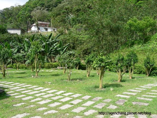坪林石雕公園,有很多茶花