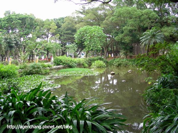 女生宿舍對面的小池塘