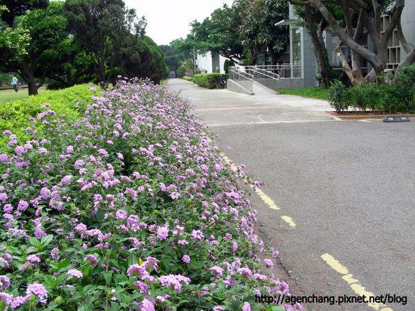 處處有花的校園