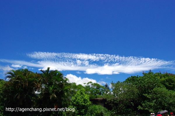 很像秋刀魚的雲