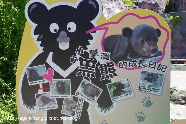 小黑熊的故事