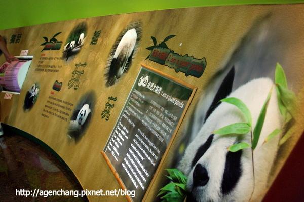 熊貓館內介紹