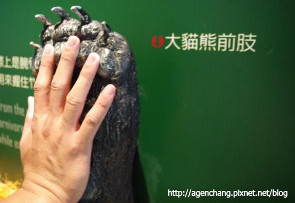 堯哥的手跟熊貓掌差不多大