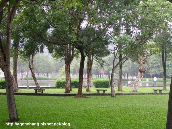 雨後的大湖公園